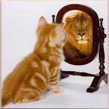 cat-lion in mirror